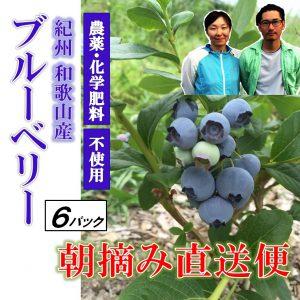 blueberry6p