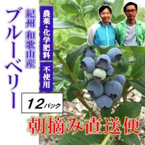 blueberry12p